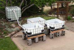 Aquaponics setup with 4 IBC tanks