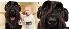 Pet therapy in a children's hospital