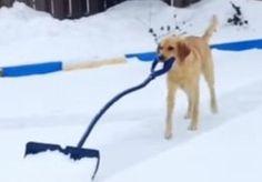 Good doggie.