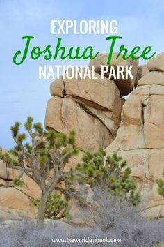Guide and tips to exploring Joshua Tree National Park with kids in California, USA