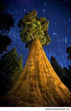 Starry Night - Sequoia National Park, California
