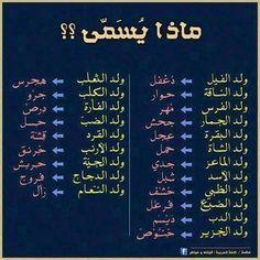 - ماذا يسمی؟ What is it called?- ماذا يسمی؟ What is it called?- ماذا يسمی؟ What is it called? Islamic Phrases, Islamic Quotes, Words Quotes, Life Quotes, Arabic Poetry, Learning Websites, Islamic Teachings, Islam Facts, Beautiful Arabic Words