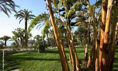 Royal Hotel | Sanremo | Park | luxuszeit.com