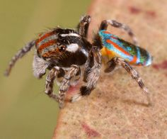 colorful spider