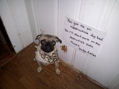You didn't tell him he couldn't destroy things, you just specified his bed.   23 Photos That Prove Pug Shaming Is The Best Kind Of Dog Shaming