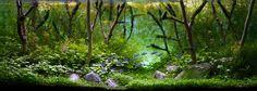 Pretty planted tank forest scene