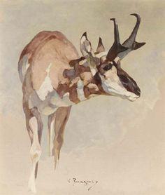 Carl Rungius (American, - Oil on artist board, x cm. Study of a Missouri Prong-Horn antelope. Wildlife Paintings, Wildlife Art, Animal Paintings, Watercolor Animals, Watercolor Art, Deer Illustration, Western Art, Painting Inspiration, Photo Art