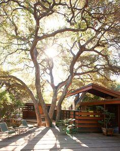 Sous le chêne, la Schaffer House de John Lautner