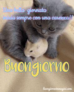 gattino grigio tenero cucciolo criceto immagini foto nuove gratis Good Morning Good Night, Good Day, First Site, Happy Day, Genere, Ideas, Positive Quotes, Photos, Messages