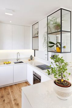 white kitchen + houseplant in open glass cabinet