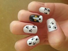 Paw prints and puppy