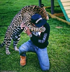 'Big hugs from Ma-Tzu the jaguar. Such an amazing creature,' Lewis Hamilton posted on Instagram