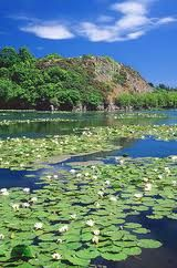 #Bosherston Lily ponds- a sight to be seen.