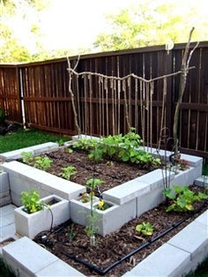 Lots of ideas and discusssion for using cinder (cement) block for raised gardens.Anyone here use cement blocks for raised beds? - GardenWeb Lots of ideas and discusssion for using cinder (cement) block for raised gardens. Raised Garden Beds, Raised Beds, Raised Gardens, Cinder Block Furniture, Cinder Blocks, Cinder Block Garden, Cement Patio, Concrete Blocks, Dream Garden