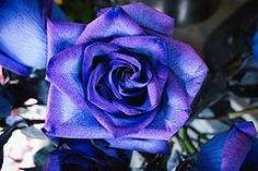 Blue Rose photo by FRESHCOLD