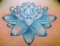 Blue Lotus Flower - Bing Images