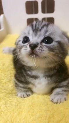 The little milk drops🥺😻
