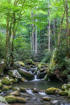 Roaring Fork Motor Trail, Great Smoky Mountains National Park ~ UNESCO World Heritage Site. Photo: Leman's Studios