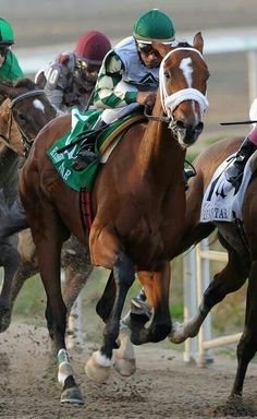 Mucho Macho Man, winner of the 2013 Breeders Cup Classic. Derby Horse, Horse Names, Sport Of Kings, Thoroughbred Horse, Racehorse, Horse Breeds, Horse Love, Courses, Horse Racing