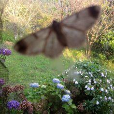 Mariposa en mi ventana