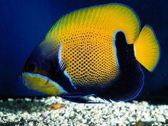 To jest tylko zwykła ryba...