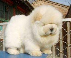 He's so fluffy!!!!