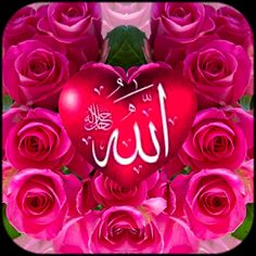 Muhammed Sav, Allah Wallpaper, Lion Pictures, Neon Signs, Christmas Ornaments, Holiday Decor, Rose, Paris France, Flowers