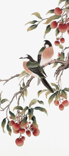 Lychee trees PNG and Clipart Chinese Prints, Chinese Art, Korean Art, Asian Art, Lychee Tree, Chinese Painting Flowers, Japanese Bird, Oriental Flowers, Korean Painting