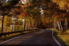 The Tunnel of Trees, M-119: Michigan's most magical stretch of road