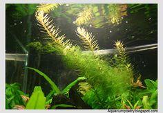 Aquarium planting tips and care- disinfecting plants