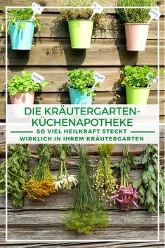 Kräutergarten Ideen: Einen Gang zum Arzt ersetzen sie zwar nicht, doch der hauseigene Kräutergarten beherbergt neben einem leckeren Gewürzregal auch eine kleine, aber feine Hausapotheke, mit der Sie sich kleinerer Wehwehchen schnell und einfach entledigen können. Zusammen mit den Tipps von unserer Pflanzenexpertin zeigen wir Ihnen, wie viel Heilkraft in Ihrem Kräutergarten steckt. Jetzt mehr erfahren!  #Kräutergarten #Kräuterbeet #Heilkraut #Hausapotheke Lily Plant Types, Types Of Plants, Indoor Garden, Garden Plants, House Plants, Small Indoor Plants, Cool Plants, Houseplants Safe For Cats, Liquid Fertilizer