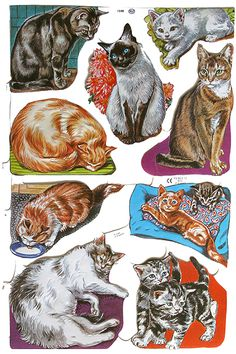 Kitty Cats Throughout the Day Scraps ~ England Childhood Toys, Childhood Memories, Vintage Paper Dolls, Victorian Christmas, Cartoon Pics, Collage Sheet, Vintage Advertisements, Cat Art, Alice In Wonderland
