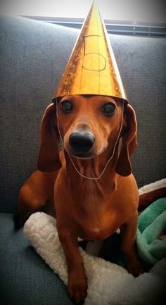 Hey, this is a great way to commemorate each birthday - wish I had thought of that a long time ago!  Birthday Doxie