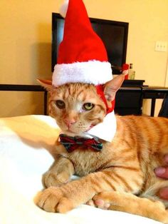 """""""Even if you're feeling a little Grinch-y, put a Santa hat on--it'll get you in the holiday spirit REAL quick."""""""