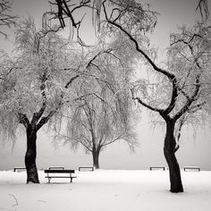 Winter in the park by Pierre Pellegrini, Photography, Digital Tree Photography, Artistic Photography, Fine Art Photography, Landscape Photography, Monochrome Photography, Black And White Photography, Arbour Day, True Art, Ansel Adams