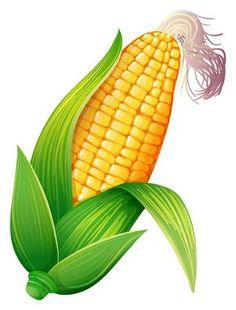 Illustration of Fresh corn on the cob illustration vector art, clipart and stock vectors. Art Drawings For Kids, Art For Kids, Flower Drawing Tutorials, Corn Plant, Corn On Cob, Fruit Art, Green Art, Painting For Kids, Botanical Illustration