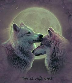 Spirituelles Tier Wolf Pictures Wolves In Love White Wolves Baby Wolves