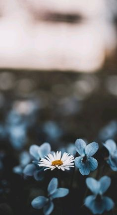Wood, Branch, Factory, Leaf Wallpaper for Android [Full HD], Flowers Background and Image Tree Wallpaper, Flower Wallpaper, Mobile Wallpaper, Wallpaper Backgrounds, Aesthetic Backgrounds, Aesthetic Iphone Wallpaper, Aesthetic Wallpapers, Cactus E Suculentas, White And Blue Flowers