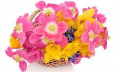 Cute flower arrangement - 3D and CG Wallpaper ID 1432545 - Desktop Nexus Abstract