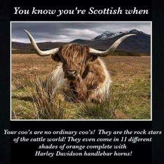 Scottish Cow, Scottish Quotes, Scottish Gaelic, Scottish Highlands, Scottish People, Scotland History, Highland Cattle, Scotland Travel, Scotland Vacation