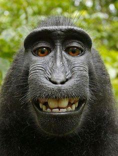 Las 597 Mejores Imágenes De Monos Micos Primates Y Demás En