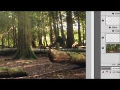 Photoshop: SUNBEAMS! How to make them filter through trees.