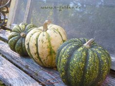 Winter squash - great for storage and delicious...