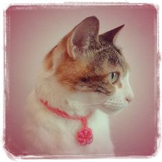 Collier pour Chat Rose - Rainbow Loom