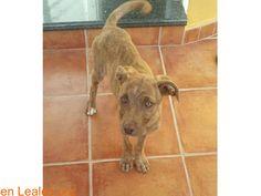 Perros encontrados  España  Las Palmas - Gran Canaria  Telde March 04 2018 at 08:14PM   GRAN CANARIA  #PERDIDO #ENCONTRADO  Contacto y Info: https://leales.org/perdidos-o-encontrados/perros-encontrados_1/gran-canaria_i3581 #Difunde en #LealesOrg un #adopta y sé #acogida para #AdoptaNoCompres O un #SeBusca de #perro o #gatos ℹ Encontrada hoy 4 de marzo en San Antonio Telde. Hembra sin chip con 4 meses aproximadamente. BUSCA FAMILIA URGENTE!! Es muy buena se lleva bien con otros perros y está…