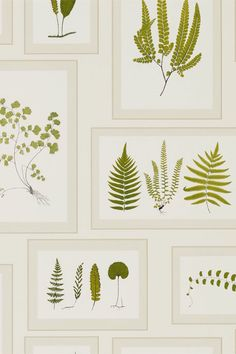 Fern Gallery wallpaper by Sanderson #sanderson #leafwallpaper For this and other inspiration visit my fabric and wallpaper blog: patternspy.com
