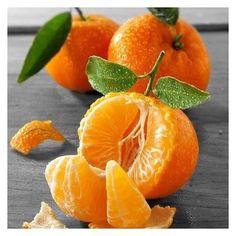 É importante saber os períodos bons para consumir certas frutas e tirar o melhor proveito da qualidade, dos nutrientes e até dos preços. Estamos na época de: ⠀⠀⠀⠀⠀⠀⠀⠀⠀⠀⠀⠀⠀⠀⠀⠀⠀⠀⠀⠀⠀⠀⠀⠀⠀⠀⠀⠀⠀⠀• maçã• banana • tangerina • abacaxi • abacate • goiaba • limão taiti • pêra • pinha e fruta do conde • coco verde • uva • jaca • ameixa • figo • pessego • mamão ⠀⠀⠀⠀⠀⠀⠀⠀  Coma limpo, prefira os alimentos orgânicos.  #frutasdaestação #frutasdemarço #orgânicos
