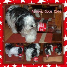 My #dog just looooves #cocacola