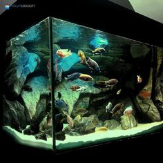Massive rocks aquarium backgrounds are perfect If you want to create a breath- taking piece of nature that will leave everyone in awe. Cichlid Aquarium, Tetra Fish, Tropical Fish Tanks, Aquarium Backgrounds, Aquarium Design, African Cichlids, Tank Design, Model Gallery, Glass Boxes