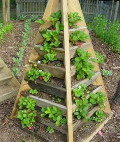 Pyramid Planter: Build your own 3 ft. and 6 ft. pyramid planters for strawberries, herbs, or flowers! Plans include step by step instructions with photos. Strawberry Tower, Strawberry Planters, Strawberry Patch, Strawberry Beds, Strawberry Garden, Potager Palettes, Lawn And Garden, Home And Garden, Herb Garden